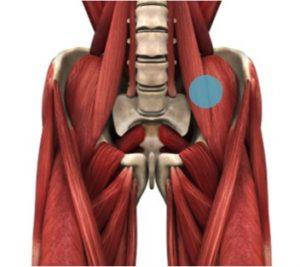 腸腰筋と腰痛